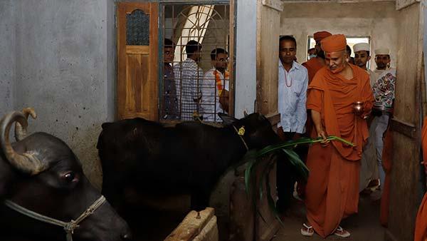 HDH Swamishri Vicharan | 16 to 31 August, 2021
